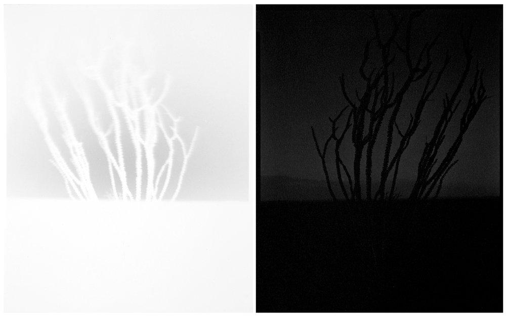 scott b. davis  ocotillo, ocotillo (no. 12), 2015 unique paper negative palladium/platinum prints, diptych 10 x 16 inches (each 10 x 8 inches)