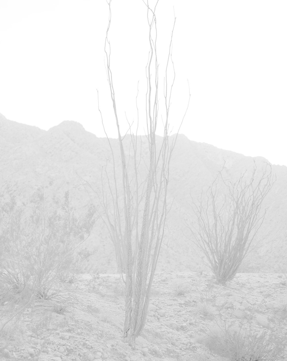 scott b. davis  ocotillo, ocotillo (no. 27), 2016/2016 palladium print 20 x 16 inches edition 1/5