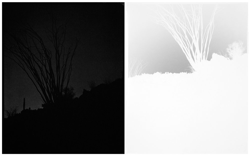 scott b. davis  ocotillo, ocotillo (no. 36),  2016 unique platinum/palladium paper negative prints, diptych 10 x 16 inches (each 10 x 8 inches)