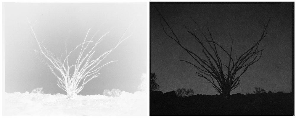 scott b. davis  ocotillo, ocotillo (no. 37), 2016unique paper negative palladium/platinum prints, diptych 8 x 20 inches (each 8 x 10 inches)