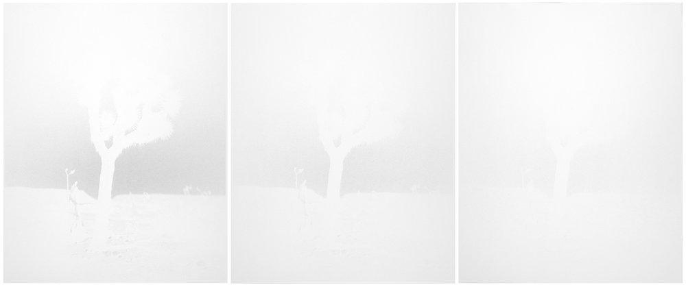 scott b. davis   joshua tree, pioneertown, california, 2014   unique paper negative palladium prints, triptych   20 x 48 inches (each 20 x 16 inches)