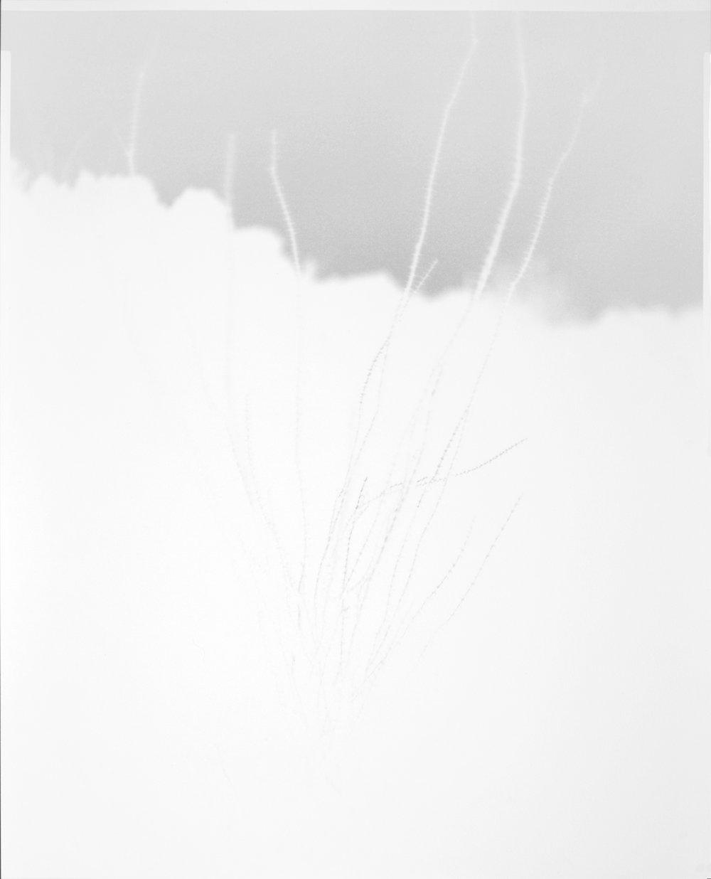 scott b. davis   ocotillo, ocotillo (no. 30),  2016   unique paper negative palladium print   20 x 16 inches