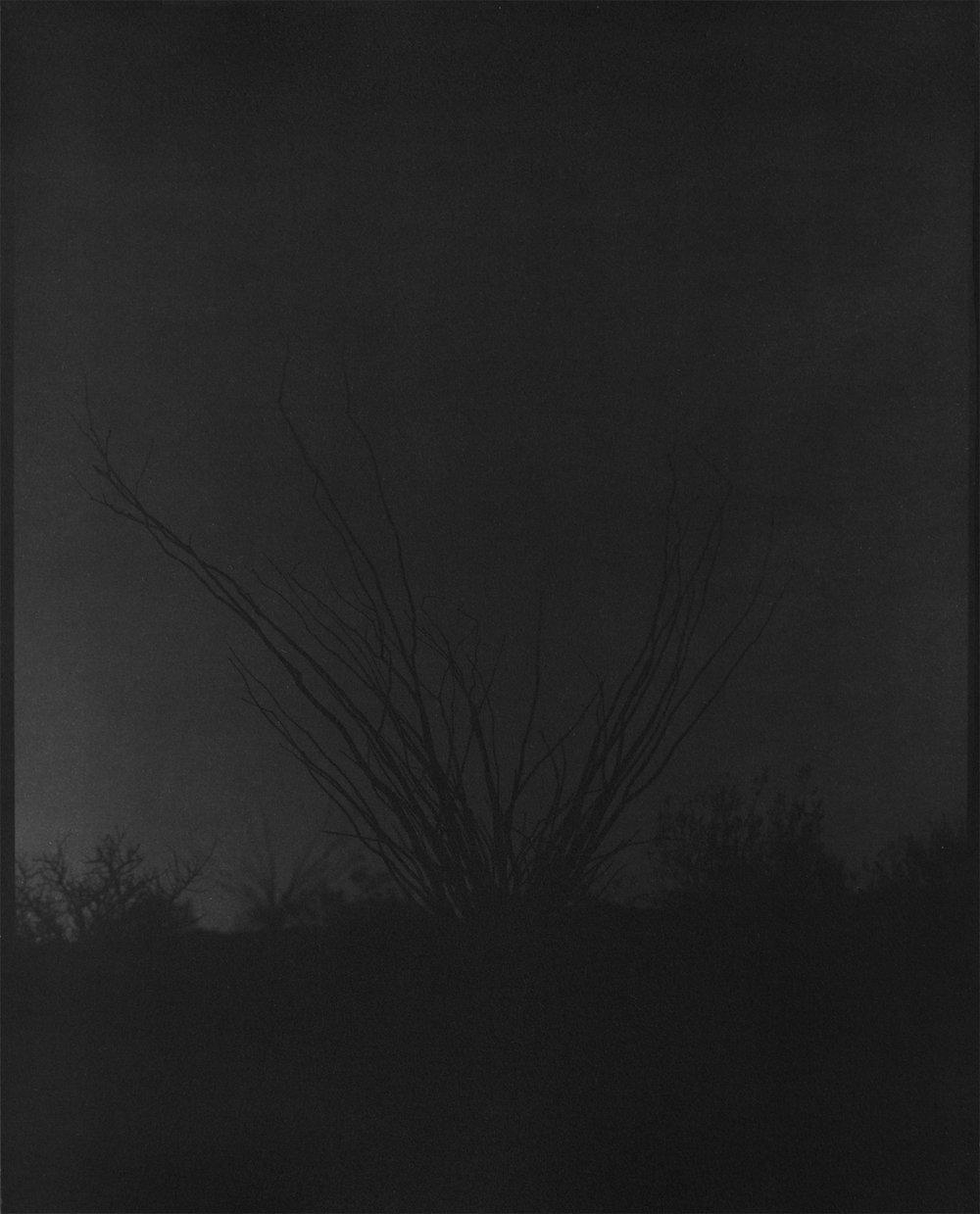 scott b davis   ocotillo, ocotillo (no. 40),  2016   platinum/palladium print   20 x 16 inches   edition 1/5
