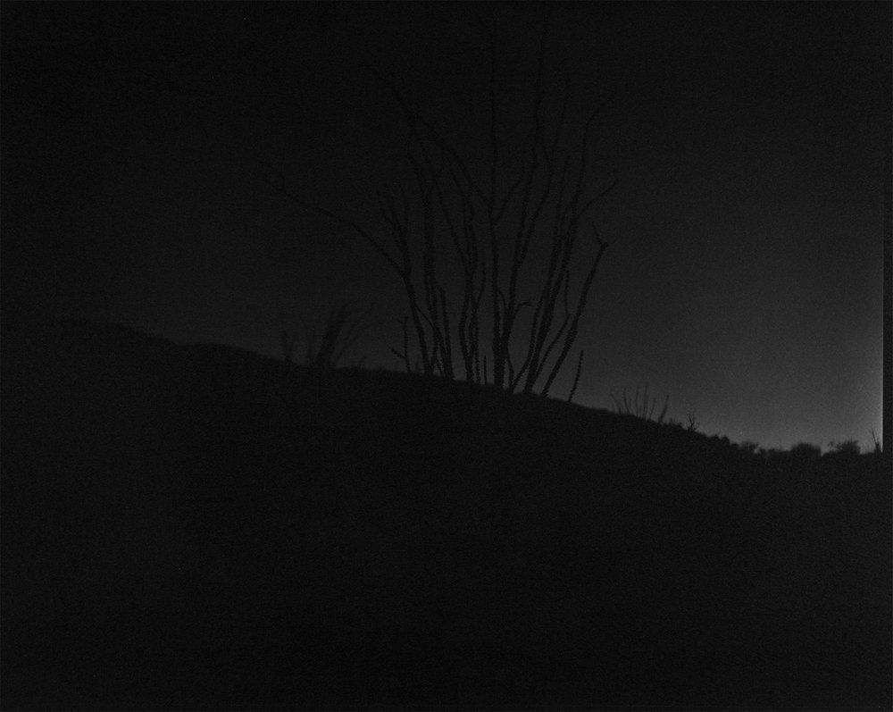 scott b. davis   ocotillo, near palm desert,  california, 2015   platinum/palladium print   16 x 20 inches   edition 1/5