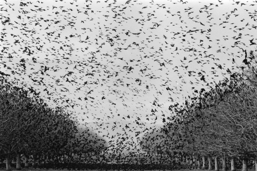 Swarm |  24 x 36 inches