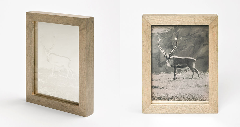 CHRISTINA SEELY Arctic - CARIBOU Daguerreotype, 2012-2016 Museum Sets, 4.5 x 5.5 inches, edition of 3 + 1AP mall Single Plates, 2.5 x 3 inches, edition 3 + 1AP