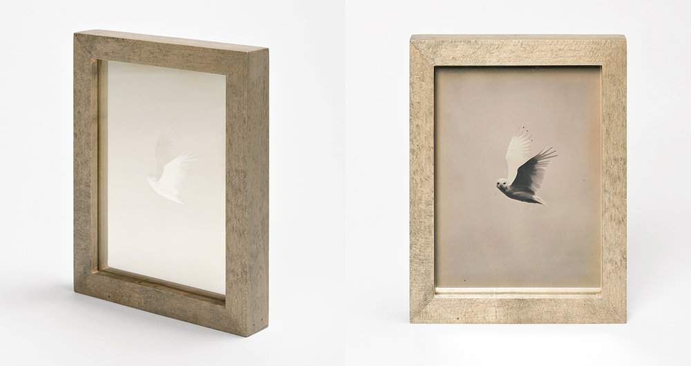 CHRISTINA SEELY Arctic - SNOWY OWL Daguerreotype, 2012-2016 Museum Sets, 4.5 x 5.5 inches, edition of 3 + 1AP Small Single Plates, 2.5 x 3 inches, edition 3 + 1AP