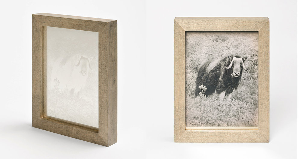 CHRISTINA SEELY Arctic - MUSKOX Daguerreotype, 2012-2016 Museum Sets, 4.5 x 5.5 inches, edition of 3 + 1AP mall Single Plates, 2.5 x 3 inches, edition 3 + 1AP