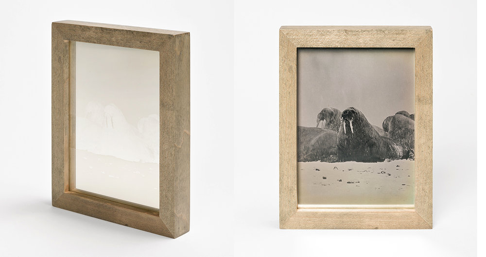 CHRISTINA SEELY Arctic - WALRUS Daguerreotype, 2012-2016 Museum Sets, 4.5 x 5.5 inches, edition of 3 + 1AP mall Single Plates, 2.5 x 3 inches, edition 3 + 1AP