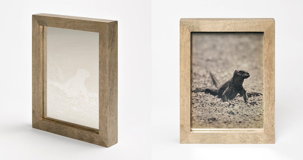 CHRISTINA SEELY Tropic - MARINE IGUANA Daguerreotype, 2012-2016 Museum Sets, 4.5 x 5.5 inches, edition of 3 + 1AP Small Single Plates, 2.5 x 3 inches, edition 3 + 1AP
