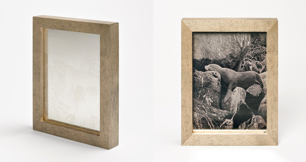CHRISTINA SEELY Tropic - Galápagos Fur Seal Daguerreotype, 2012-2016 Museum Sets, 4.5 x 5.5 inches, edition of 3 + 1AP Small Single Plates, 2.5 x 3 inches, edition 3 + 1AP