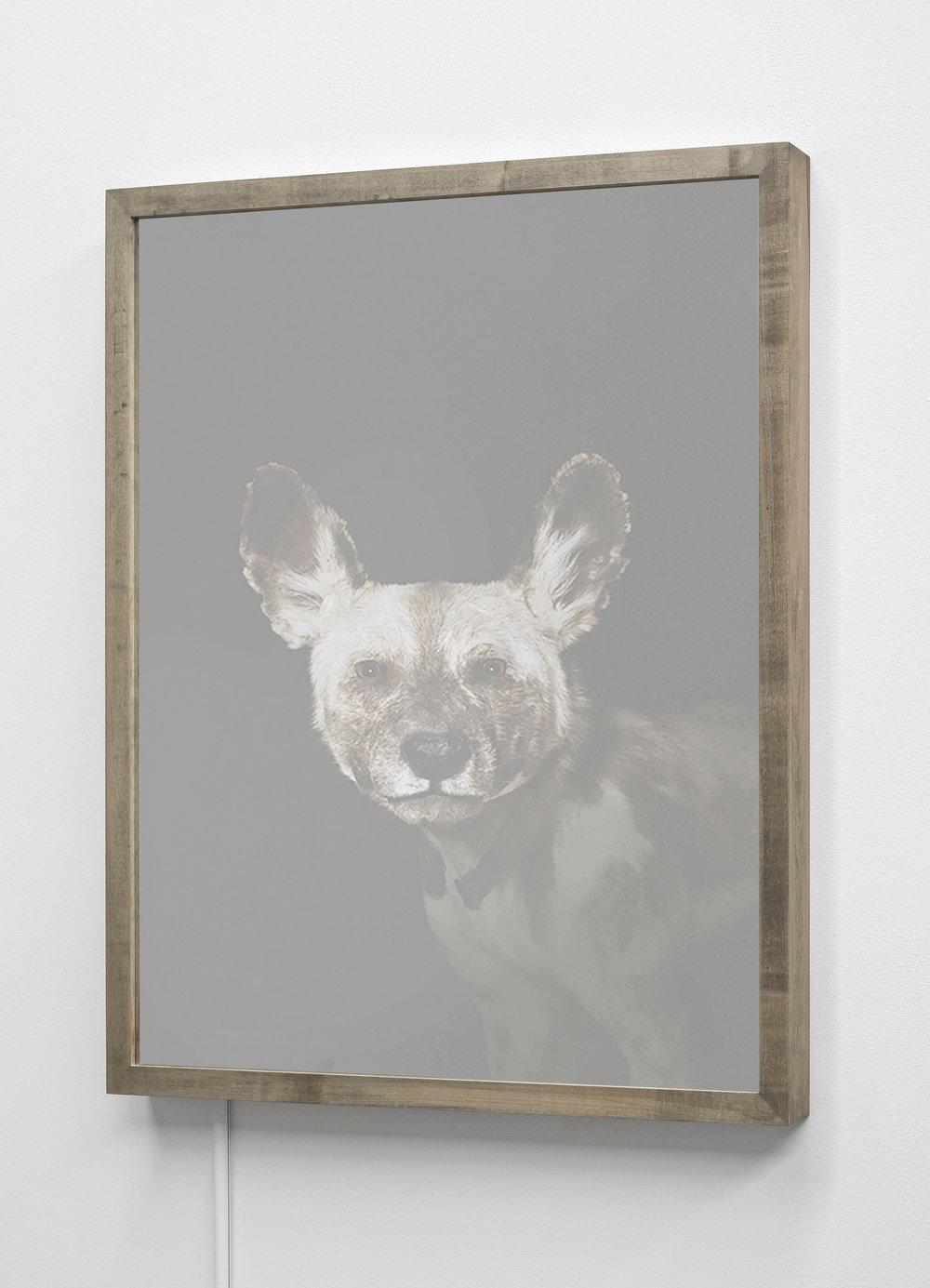 CHRISTINA SEELY  African Hunting Dog,  Lycaon pictus - Endangered Kinetic Mirrored Lightbox  Available sizes: 30 x 24 in | Edition of 3 + 1AP 20 x 16 in | Edition of 3 + 1AP
