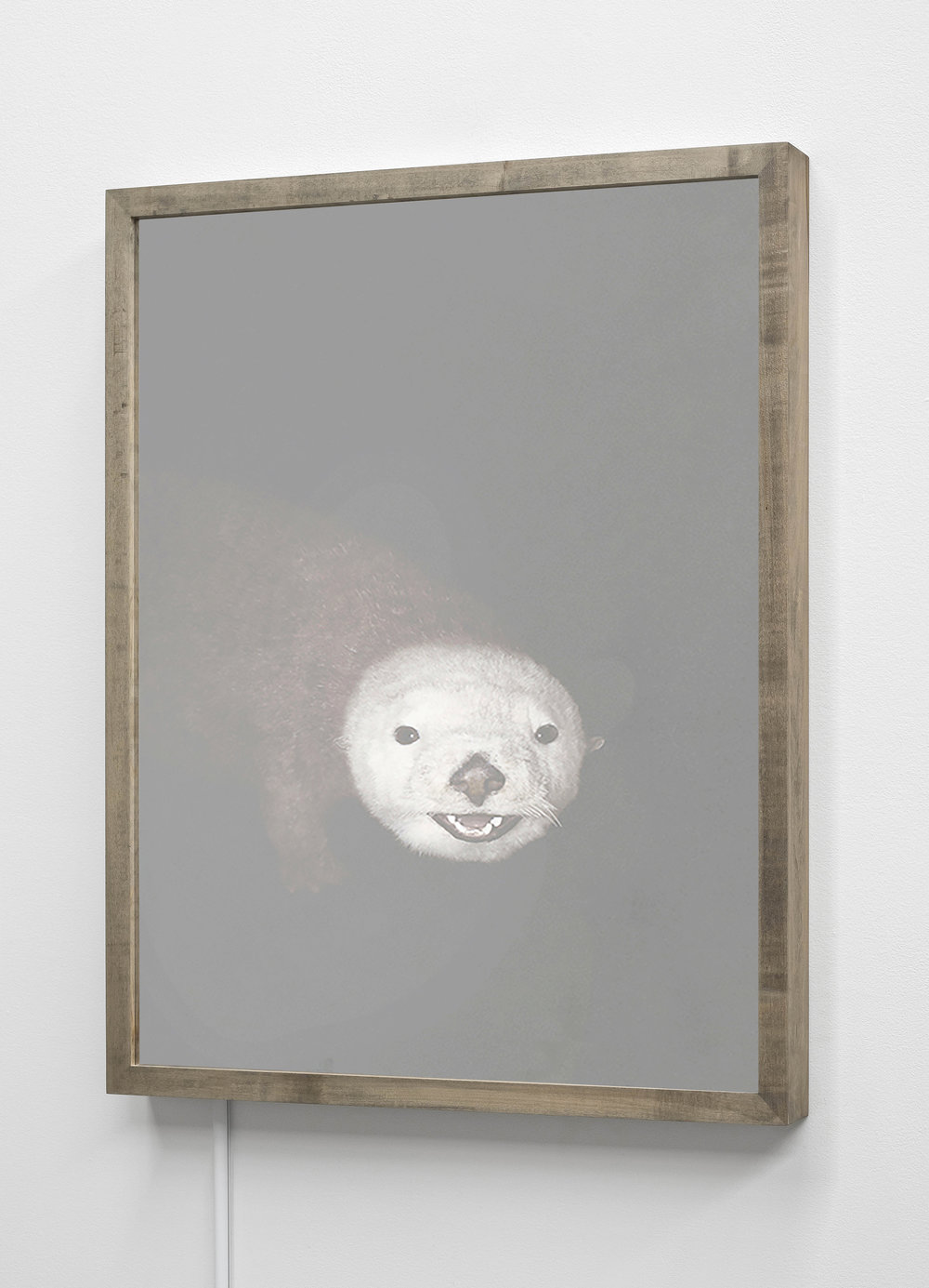CHRISTINA SEELY  Sea Otter,  Enhydra lutris - Endangered Kinetic Mirrored Lightbox  Available sizes: 30 x 24 in | Edition of 3 + 1AP 20 x 16 in | Edition of 3 + 1AP