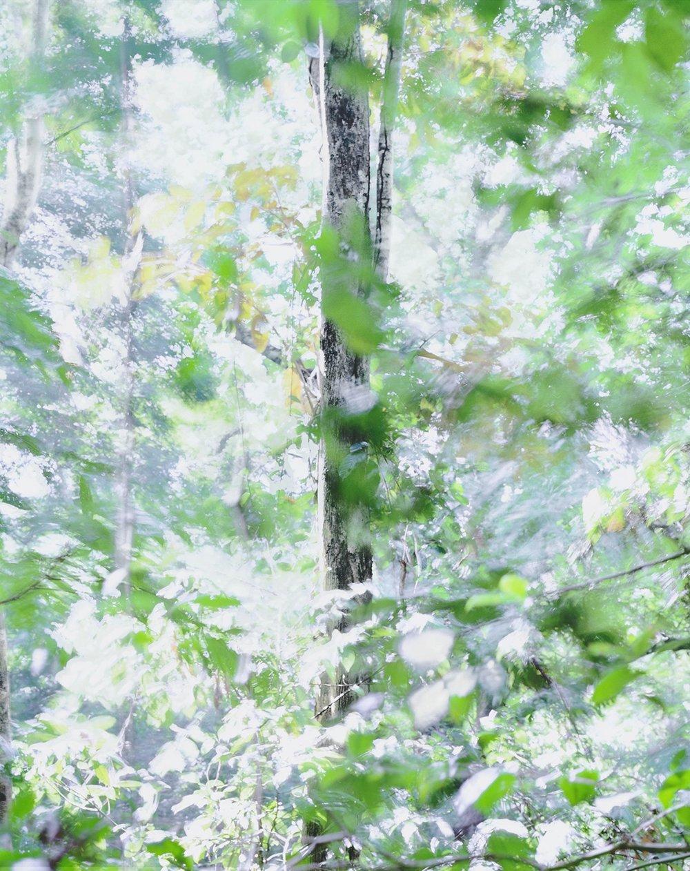 Respiro 06, 2017 37.5 x 30 in Vellum + Archival Inkjet Prints Overlaid