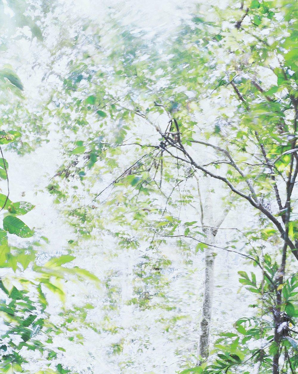 Respiro 05, 2017 37.5 x 30 in Vellum + Archival Inkjet Prints Overlaid