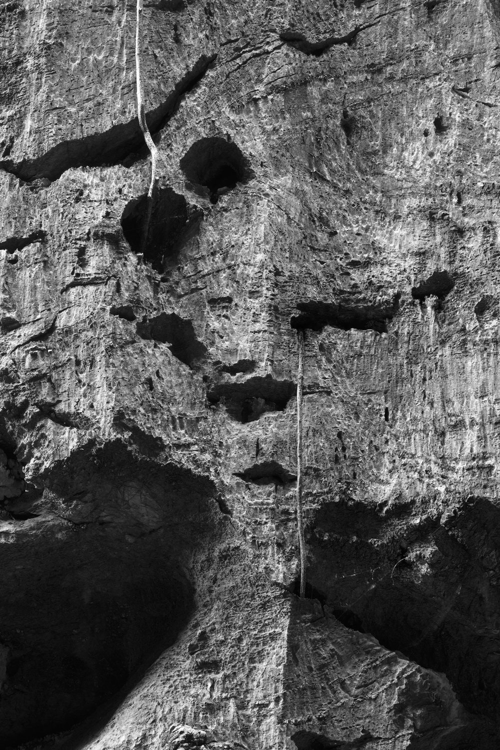 MICHAEL LUNDGREN  Roots in Guiengola, 2017  Gelatin Silver Print  Available sizes 36 x 24 in, ed. 7 + 1AP
