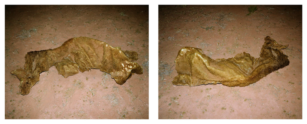MICHAEL LUNDGREN  Stereo, 2008  Archival pigment prints  Available sizes Diptych, 24 x 30 in each, ed. 7 + 1AP
