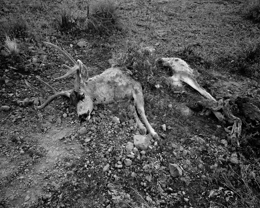 MICHAEL LUNDGREN Lion's Kill, 2005 Gelatin Silver Print  Available sizes 20 x 24 in, ed. 10 + 2AP 32 x 40 in, ed. 3 + 1AP