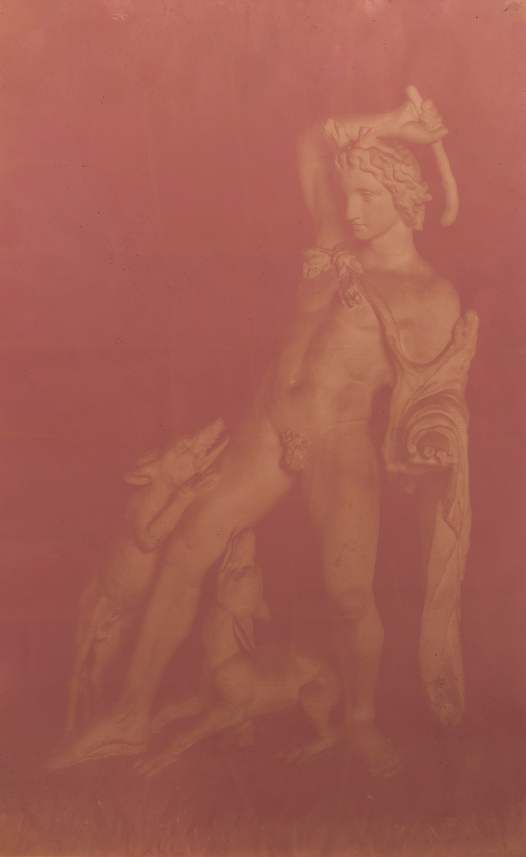 CHRISTINE ELFMAN  Actaeon attacked by his hounds,  2016 Anthotype (Amaranth dye on paper) 65 x 50 inches Unique