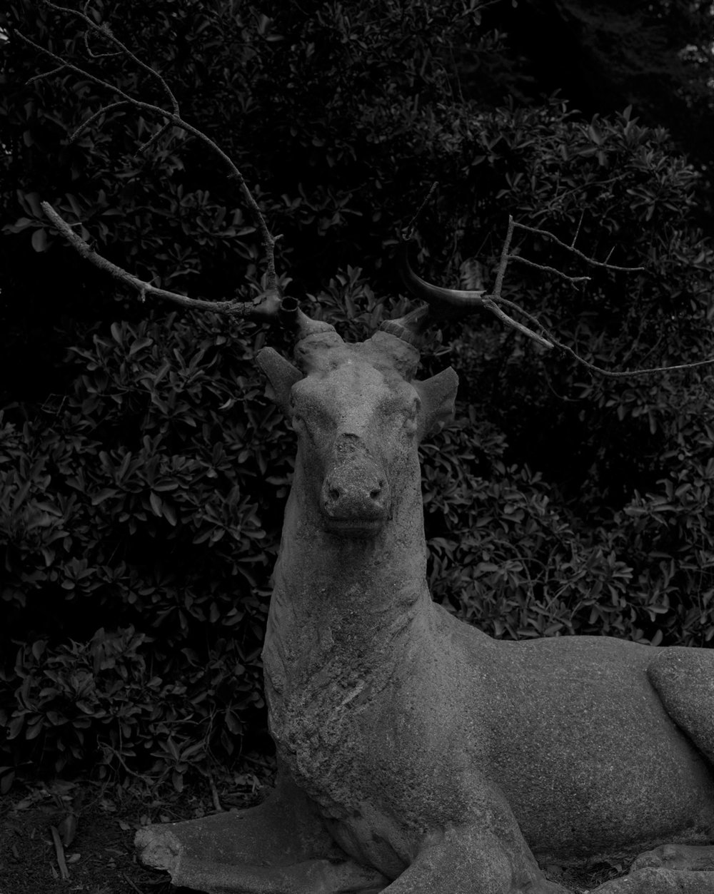 CHRISTINE ELFMAN  Actaeon as Stag , 2014 Silver gelatin print 37 x 29 inches Edition of 3 + 2AP