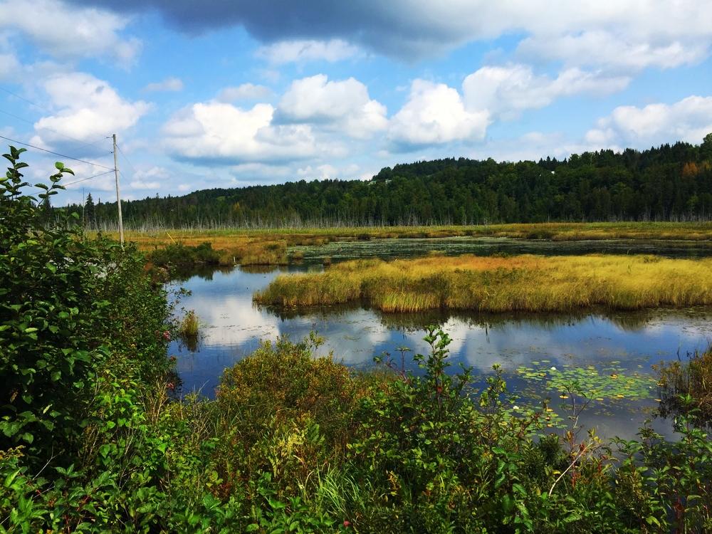 LVRT_wetland.JPG