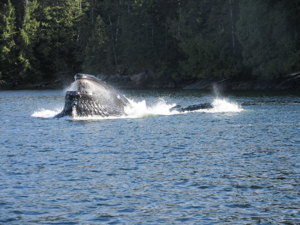 close whale.JPG