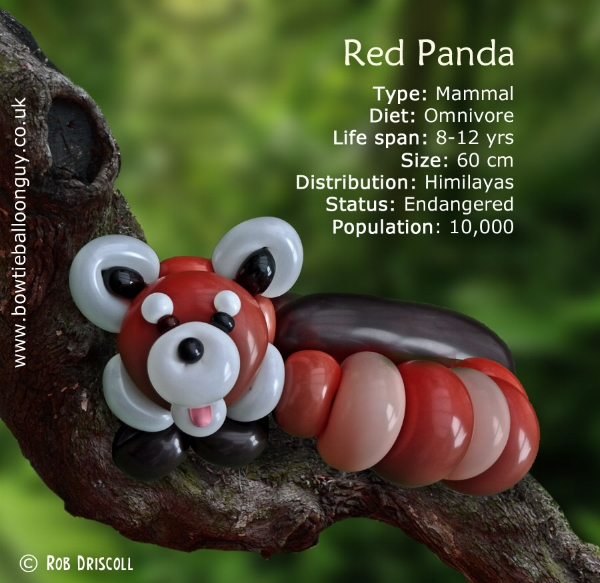 Image of: Nepal The Bowtie Balloon Guy Az Of Endangered Species Red Panda The Bowtie Balloon Guy