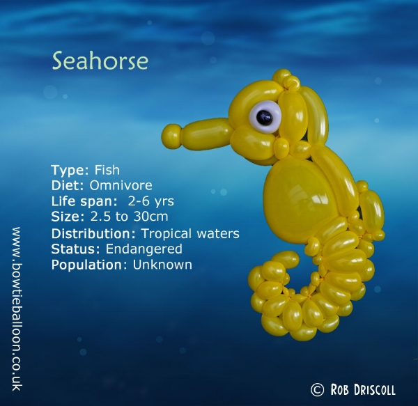 a z of endangered species seahorse the bowtie balloon guy
