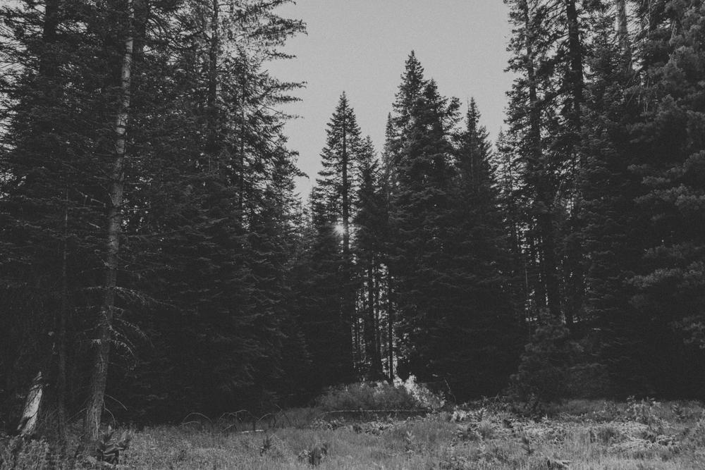 Sequoia Photoshoot.jpg