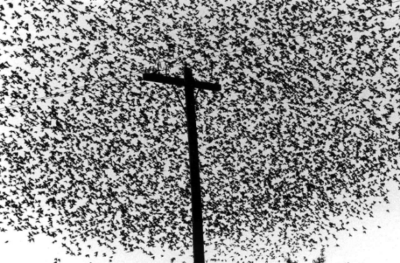 Photo: Graciela Iturbide
