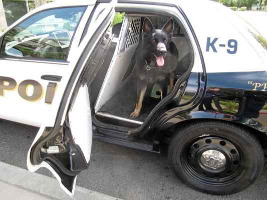 K9 Peydro;  Photo: Tessa Terrill via dailydemocrat.com