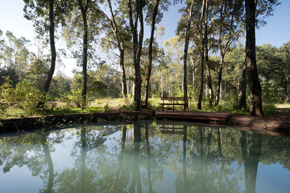 lq bosque - estanque01.jpg