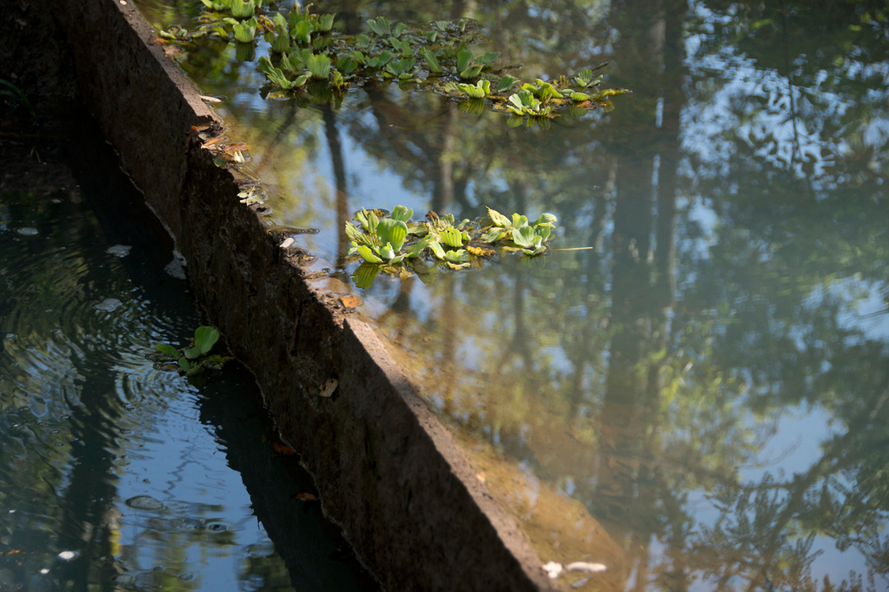 lq bosque - estanque06.jpg