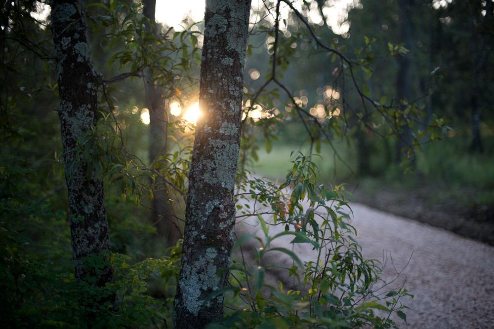 lq bosque - lugar01.jpg