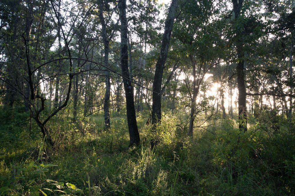 lq bosque - lugar02.jpg