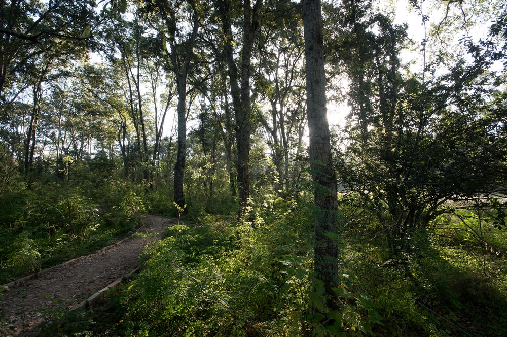 lq bosque - lugar04.jpg