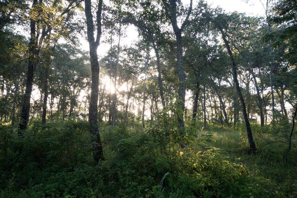 lq bosque - lugar05.jpg