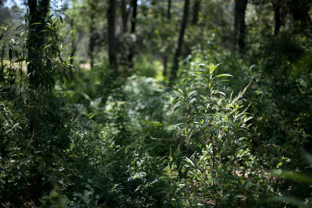 lq bosque - lugar07.jpg