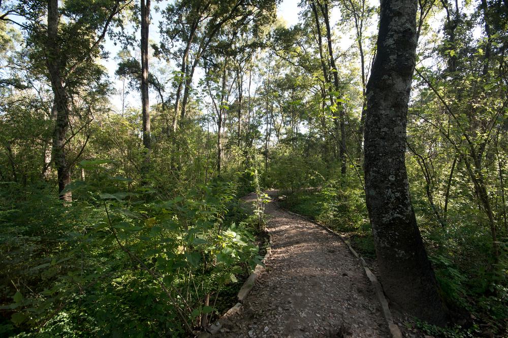 lq bosque - lugar06.jpg