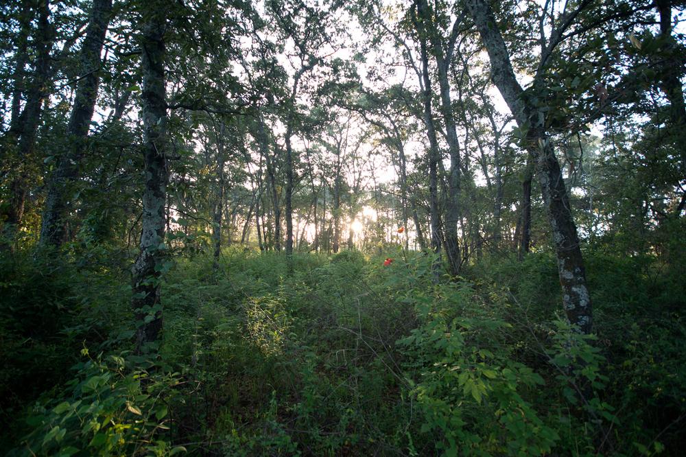 lq bosque - lugar08.jpg