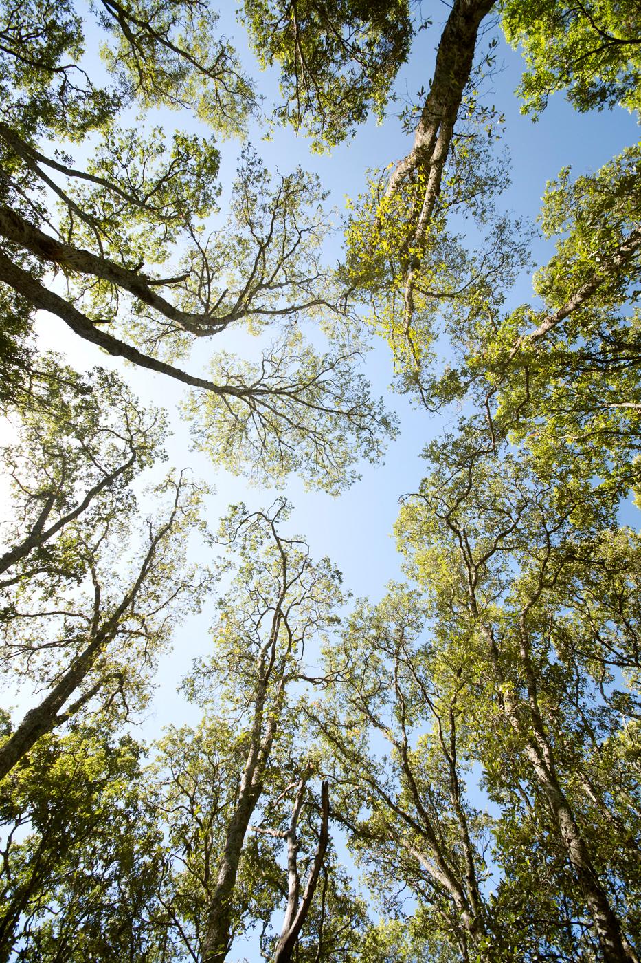 lq bosque - lugar11C.jpg