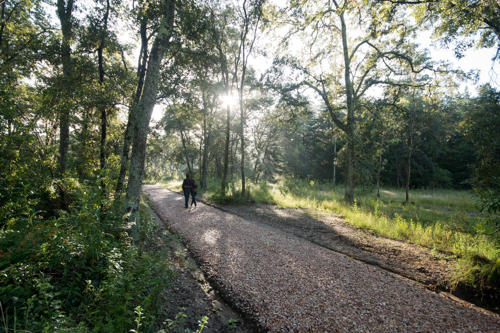 lq bosque - per01.jpg
