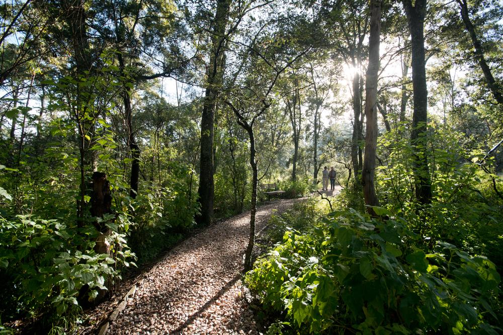lq bosque - per04a.jpg