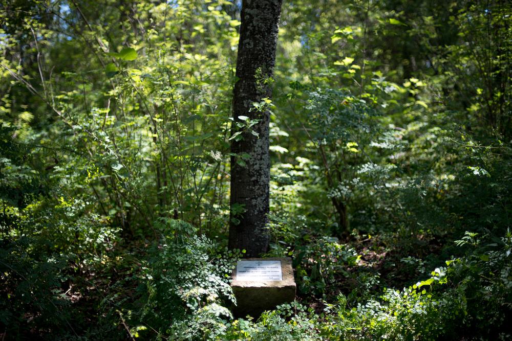 lq bosque - piedra1a.jpg