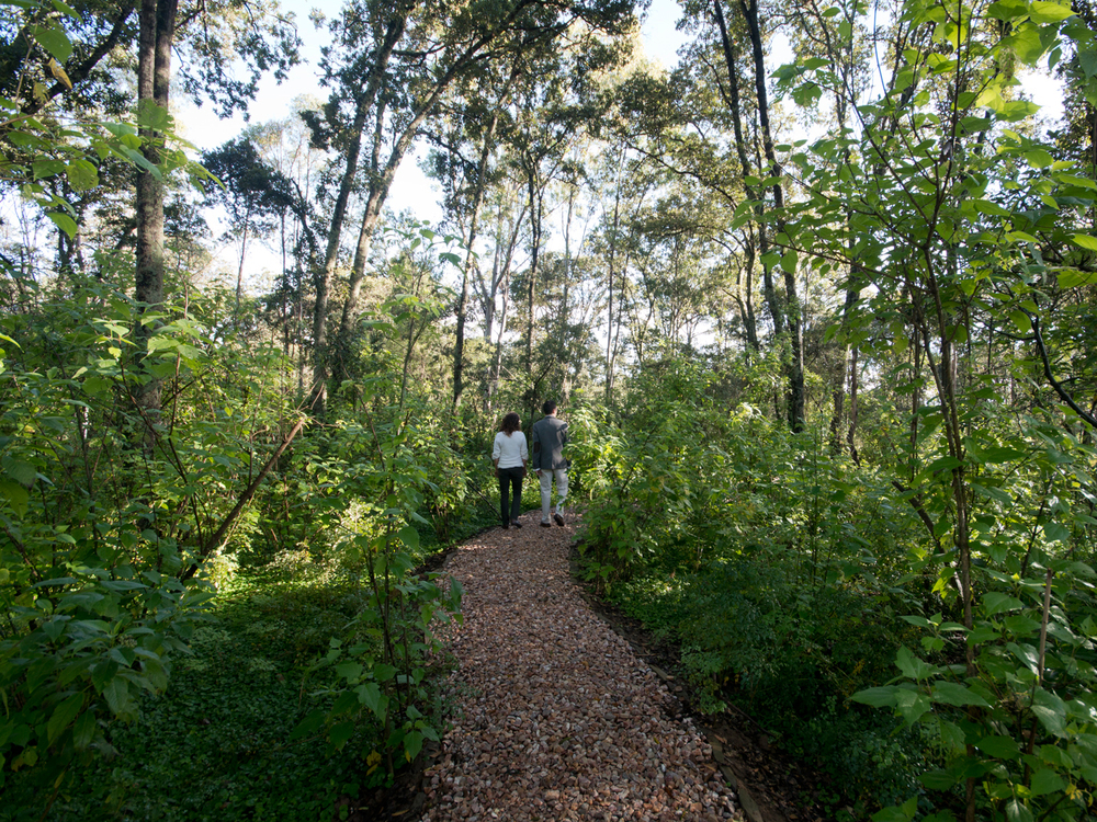 lq bosque - per11.jpg