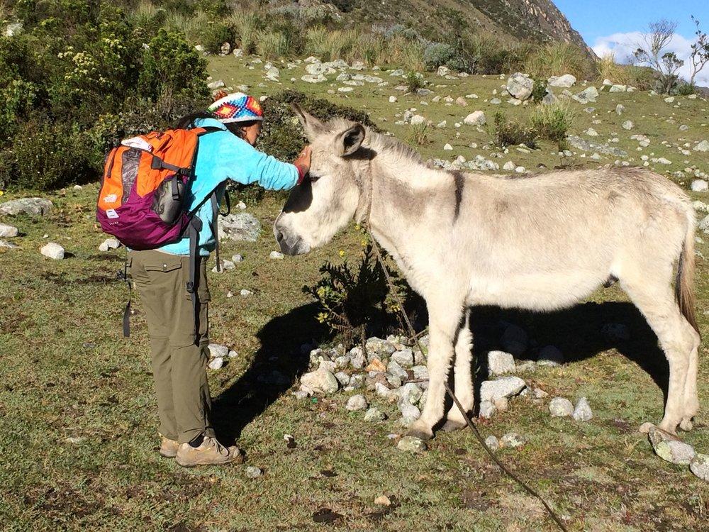 全く関係のない写真ですが。。。2014年ペルーにて