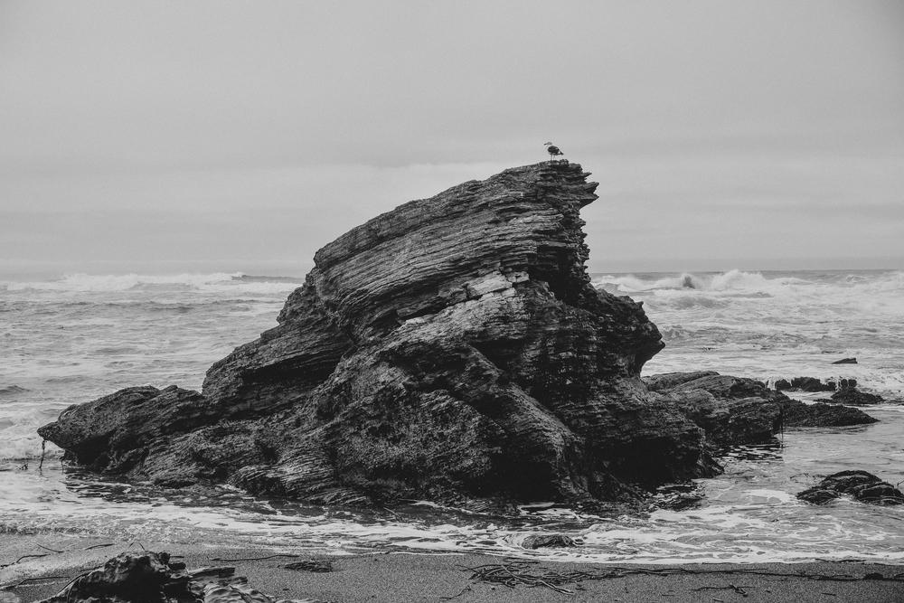 California Coast -69.jpg