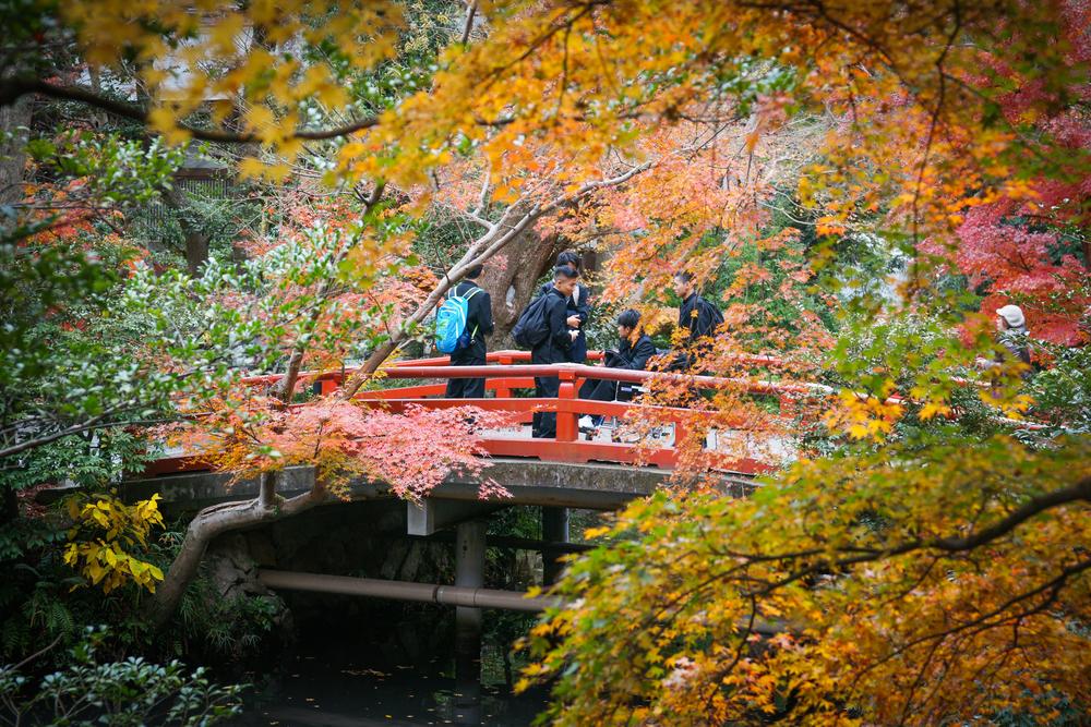 red bridge & fall leaves