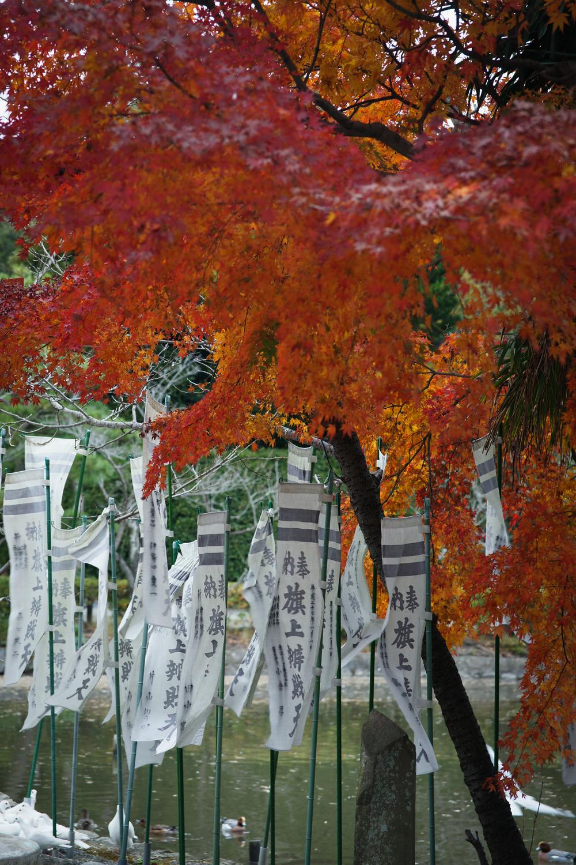 Fall leaves & nobori