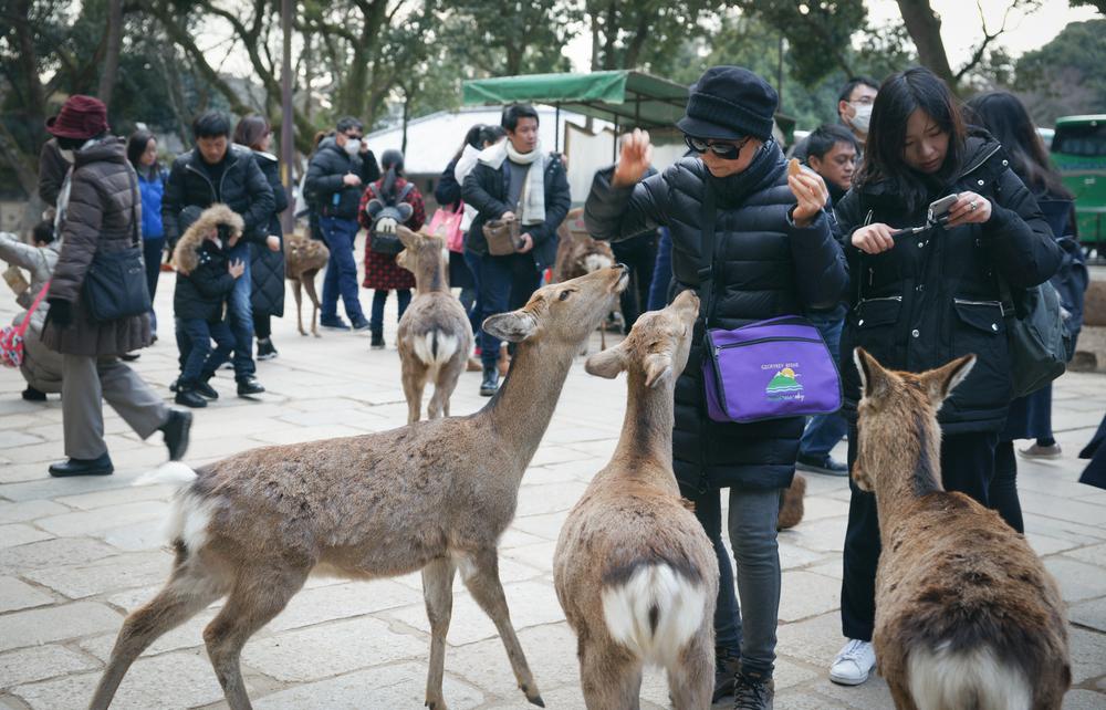 Woman feeding the deer